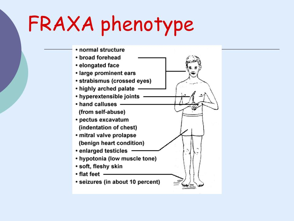 FRAXA phenotype