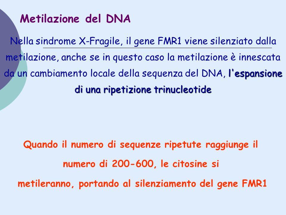 l'espansione di una ripetizione trinucleotide Nella sindrome X-Fragile, il gene FMR1 viene silenziato dalla metilazione, anche se in questo caso la me