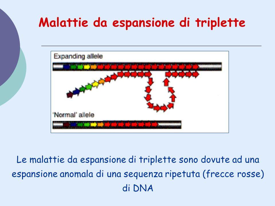 Le malattie da espansione di triplette sono dovute ad una espansione anomala di una sequenza ripetuta (frecce rosse) di DNA Malattie da espansione di
