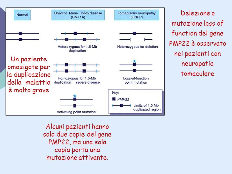 Un paziente omozigote per la duplicazione della malattia è molto grave Delezione o mutazione loss of function del gene PMP22 è osservato nei pazienti