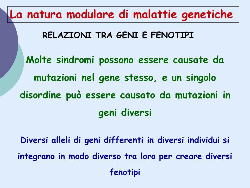 RELAZIONI TRA GENI E FENOTIPI Molte sindromi possono essere causate da mutazioni nel gene stesso, e un singolo disordine può essere causato da mutazio