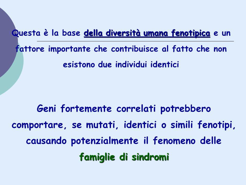 della diversità umana fenotipica Questa è la base della diversità umana fenotipica e un fattore importante che contribuisce al fatto che non esistono
