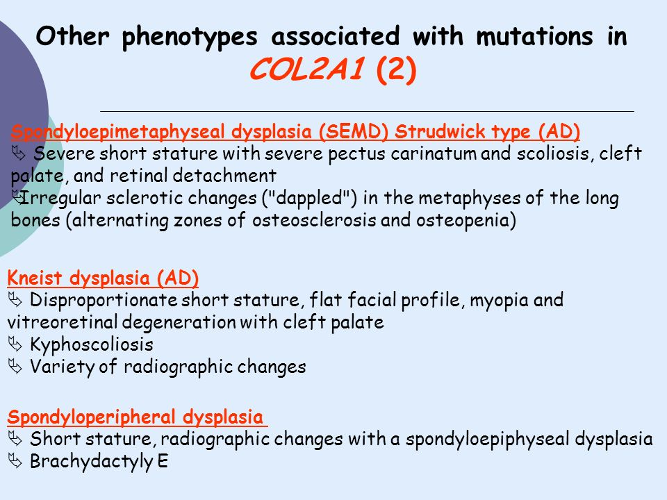 Other phenotypes associated with mutations in COL2A1 (2) Spondyloepimetaphyseal dysplasia (SEMD) Strudwick type (AD) Severe short stature with severe