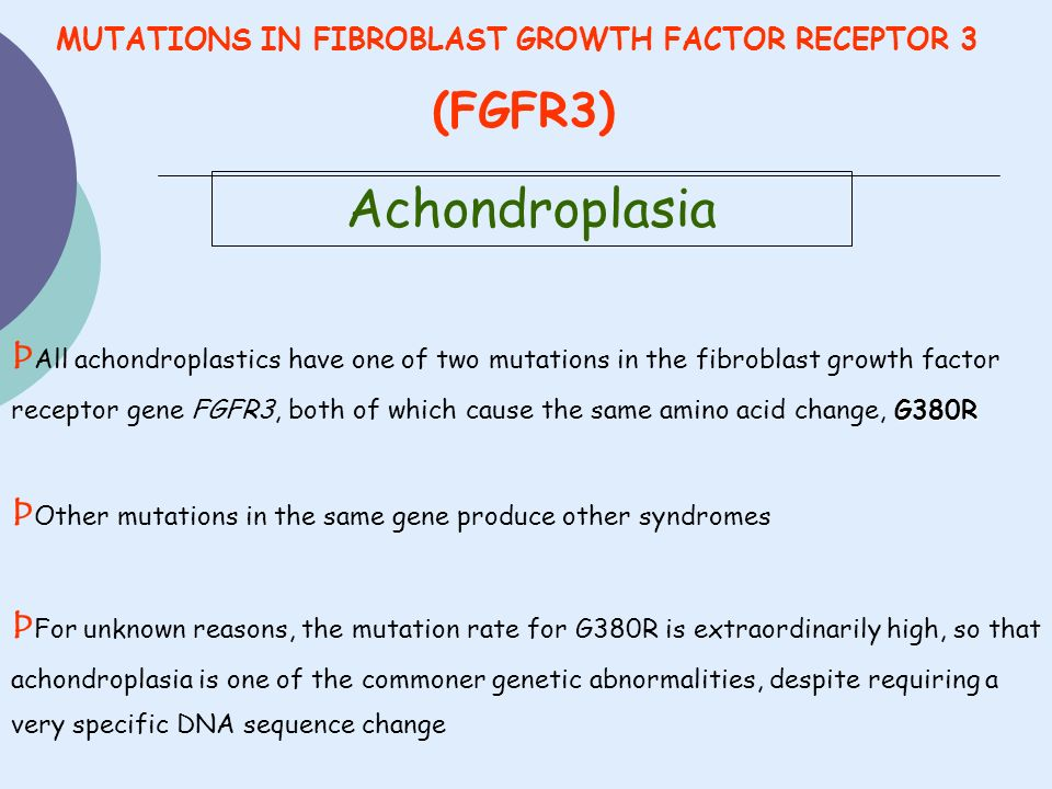Achondroplasia G380R Þ All achondroplastics have one of two mutations in the fibroblast growth factor receptor gene FGFR3, both of which cause the sam