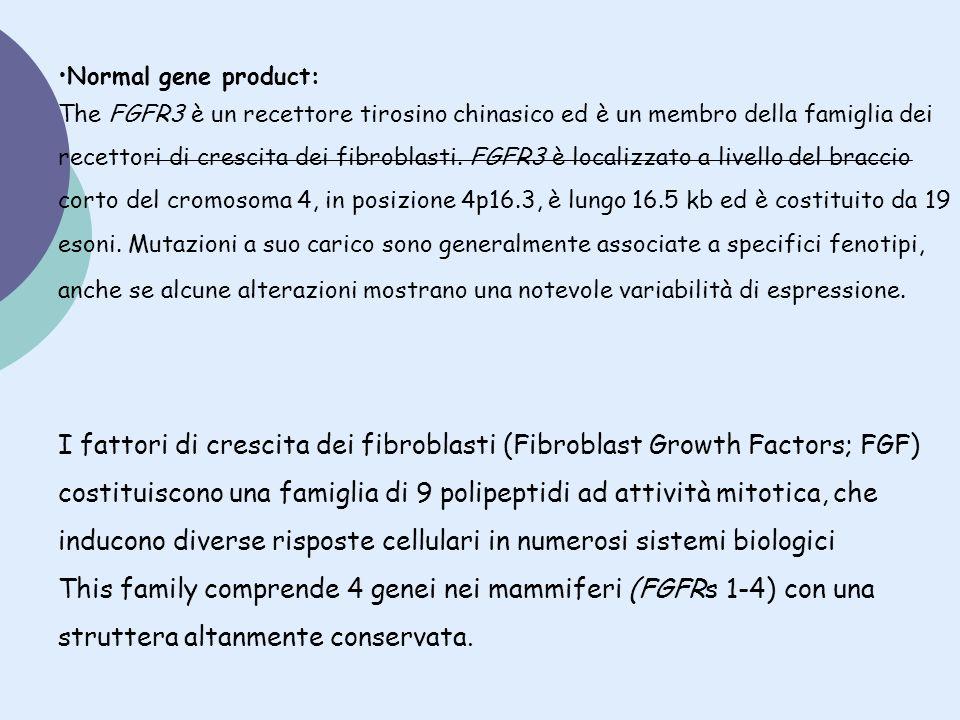 Normal gene product: The FGFR3 è un recettore tirosino chinasico ed è un membro della famiglia dei recettori di crescita dei fibroblasti. FGFR3 è loca