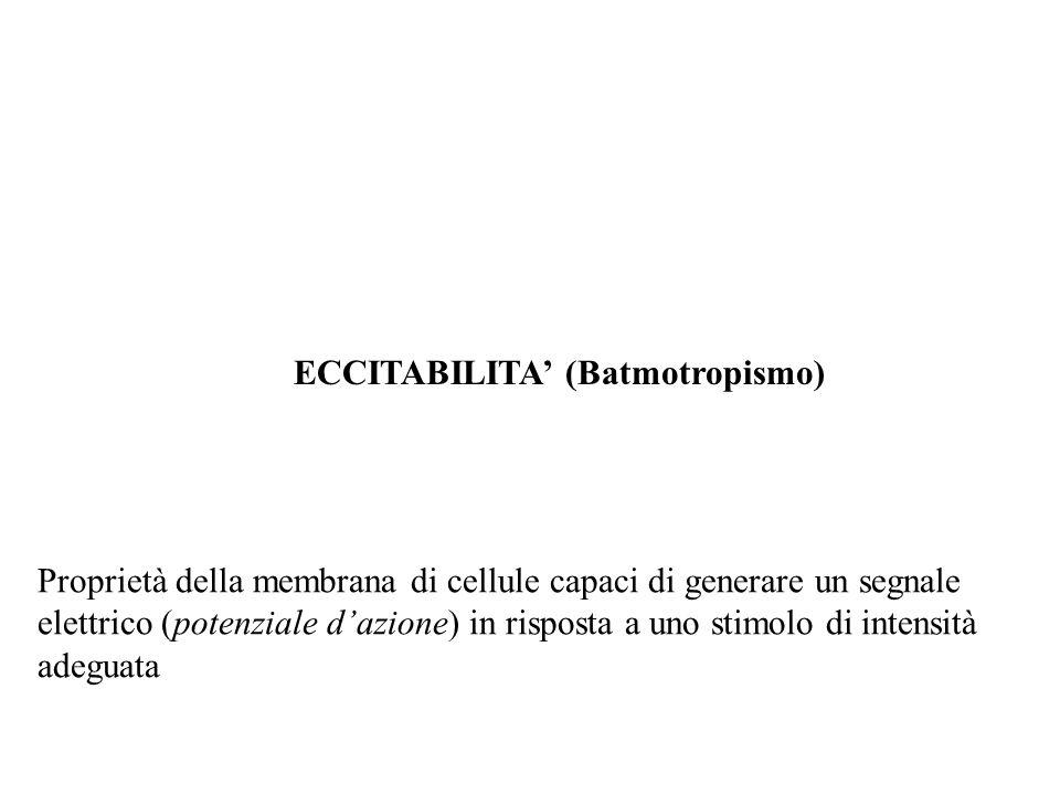 ECCITABILITA (Batmotropismo) Proprietà della membrana di cellule capaci di generare un segnale elettrico (potenziale dazione) in risposta a uno stimol