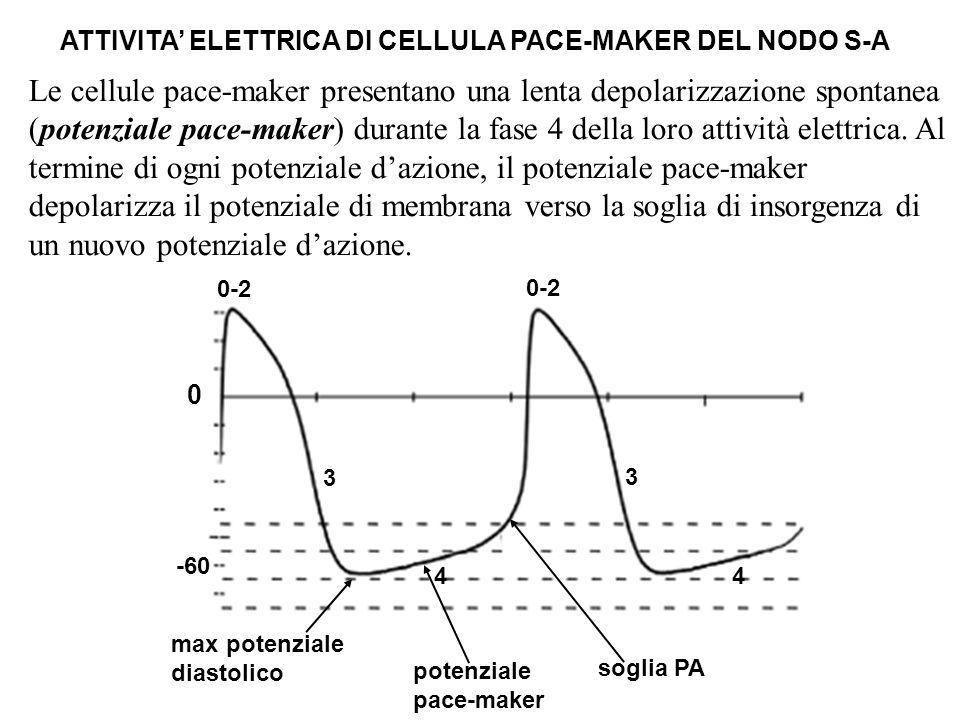0 0-2 3 3 44 potenziale pace-maker max potenziale diastolico soglia PA Le cellule pace-maker presentano una lenta depolarizzazione spontanea (potenzia