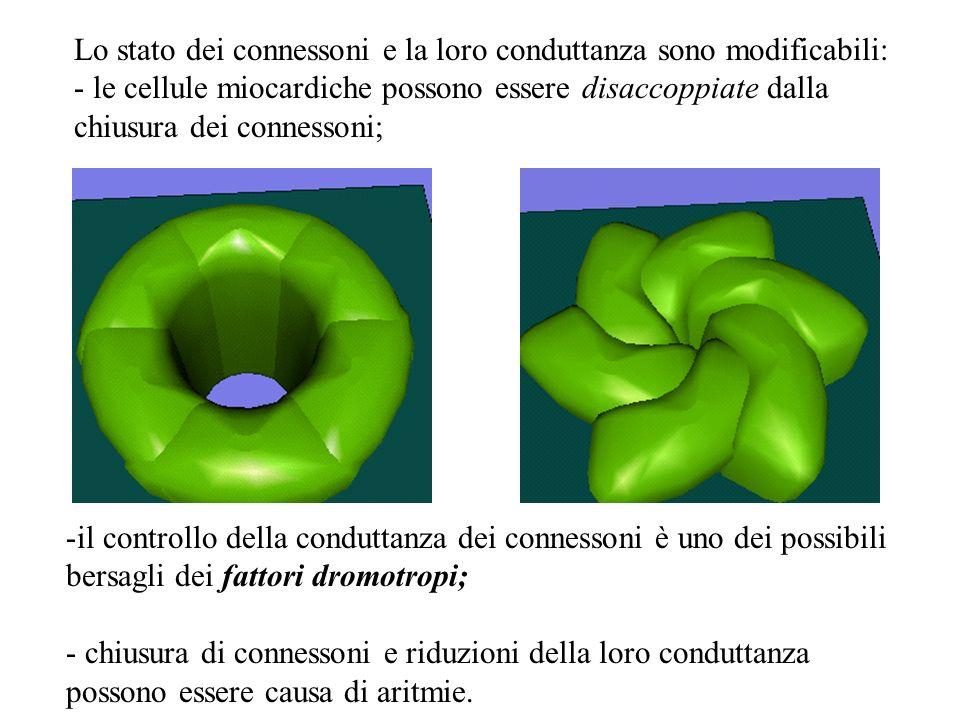 Lo stato dei connessoni e la loro conduttanza sono modificabili: - le cellule miocardiche possono essere disaccoppiate dalla chiusura dei connessoni;