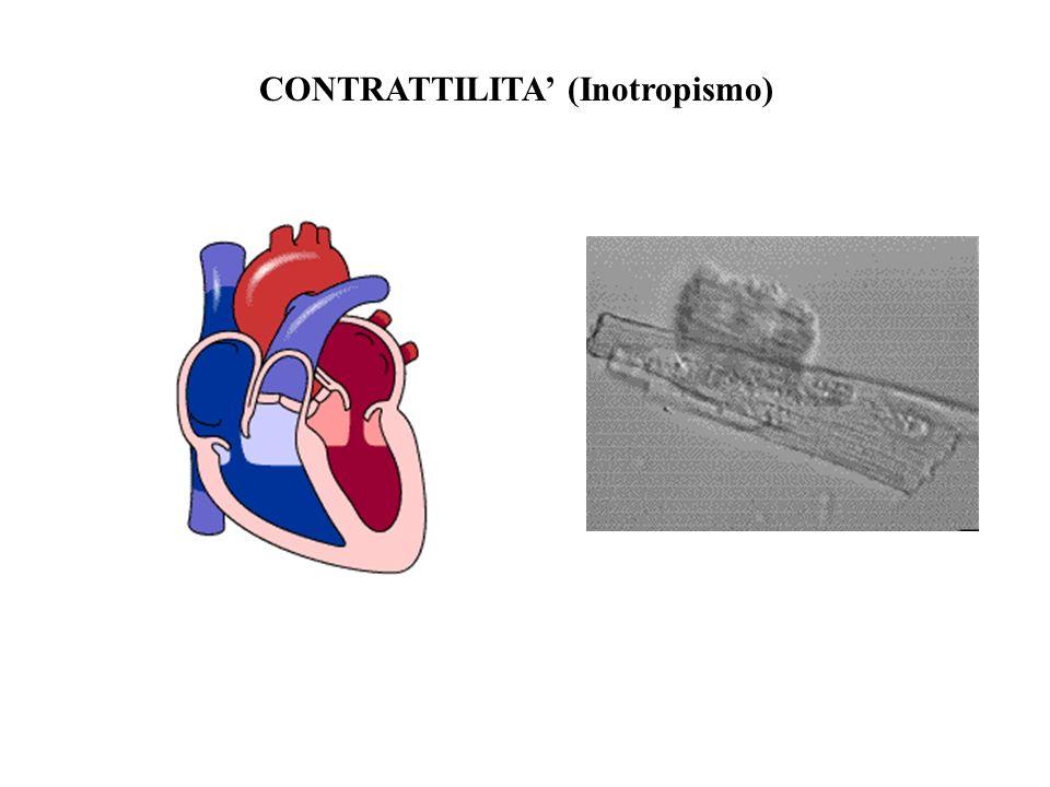 CONTRATTILITA (Inotropismo)