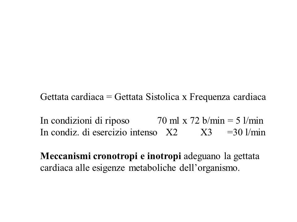 Gettata cardiaca = Gettata Sistolica x Frequenza cardiaca In condizioni di riposo 70 ml x 72 b/min = 5 l/min In condiz. di esercizio intenso X2 X3 =30