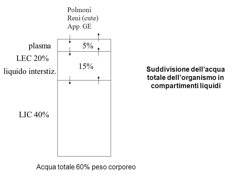 LIC 40% LEC 20% 15% 5%plasma liquido interstiz. Polmoni Reni (cute) App. GE Acqua totale 60% peso corporeo Suddivisione dellacqua totale dellorganismo