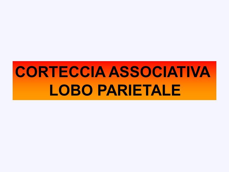 CORTECCIA ASSOCIATIVA LOBO PARIETALE