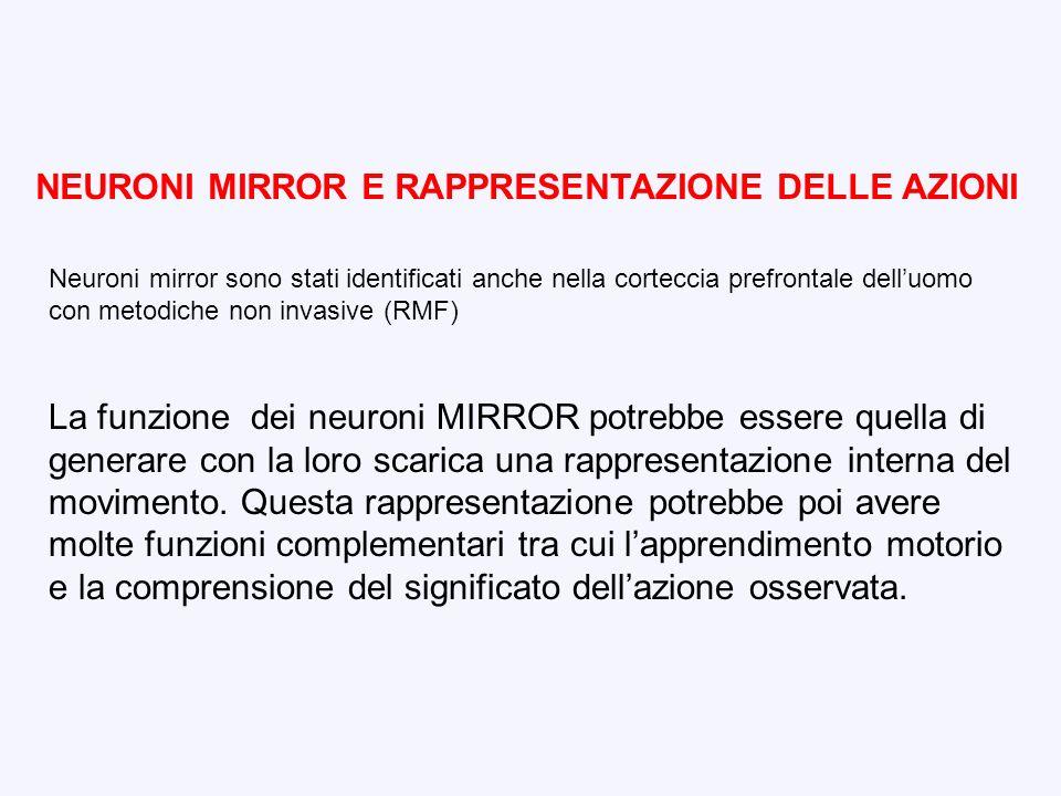 NEURONI MIRROR E RAPPRESENTAZIONE DELLE AZIONI Neuroni mirror sono stati identificati anche nella corteccia prefrontale delluomo con metodiche non inv