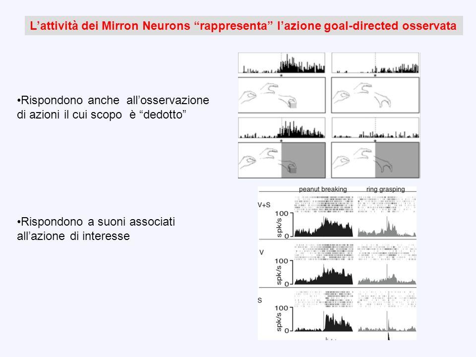 Rispondono anche allosservazione di azioni il cui scopo è dedotto Rispondono a suoni associati allazione di interesse Lattività dei Mirron Neurons rap