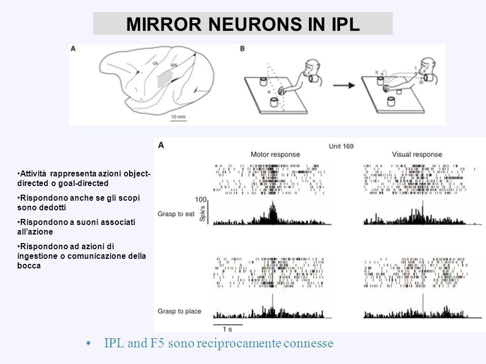 Science, 2005. MIRROR NEURONS IN IPL Attività rappresenta azioni object- directed o goal-directed Rispondono anche se gli scopi sono dedotti Rispondon