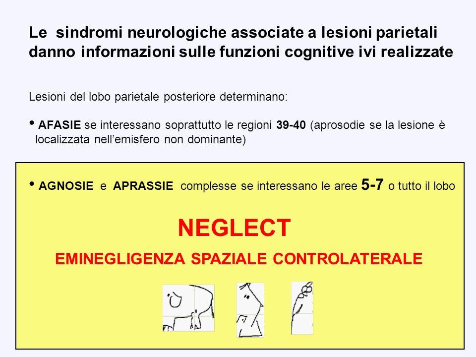 Le sindromi neurologiche associate a lesioni parietali danno informazioni sulle funzioni cognitive ivi realizzate Lesioni del lobo parietale posterior