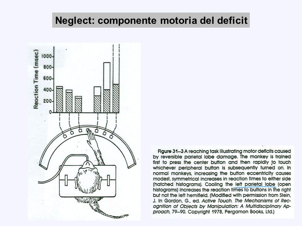 Neglect: componente motoria del deficit