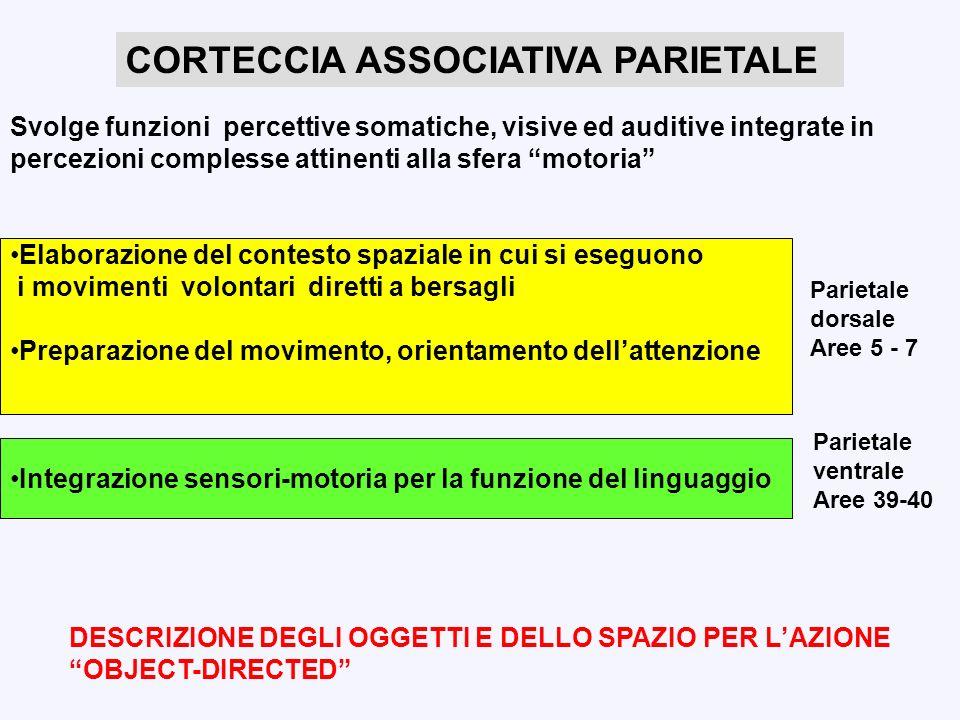Svolge funzioni percettive somatiche, visive ed auditive integrate in percezioni complesse attinenti alla sfera motoria Elaborazione del contesto spaz