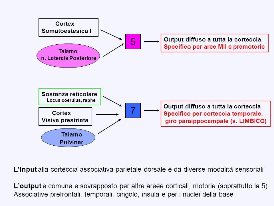 5 Cortex Somatoestesica I Talamo n. Laterale Posteriore Output diffuso a tutta la corteccia Specifico per aree MII e premotorie Cortex Visiva prestria