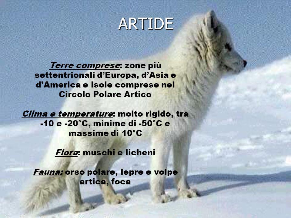 Terre comprese: zone più settentrionali dEuropa, dAsia e dAmerica e isole comprese nel Circolo Polare Artico Clima e temperature: molto rigido, tra -1