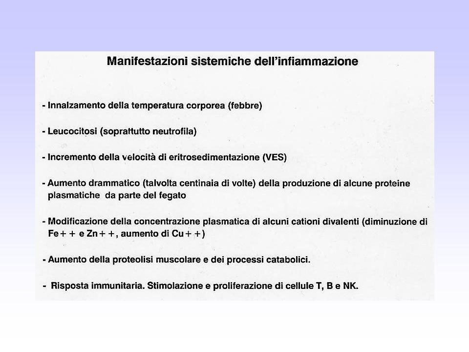 Proteine di fase acuta più note e più studiate Gruppo I Gruppo II Gruppo III 50% di aumento aumento di circa 2-4 X aumento fino a 1000 X Ceruloplasmina α1-glicoproteina acida Proteina C Reattiva (PCR) Fattori del complemento α1-inibitore proteinasi Amiloide A serica (SAA) C3, C4 (α1-antitripsina) Aptoglobina Fibrinogeno