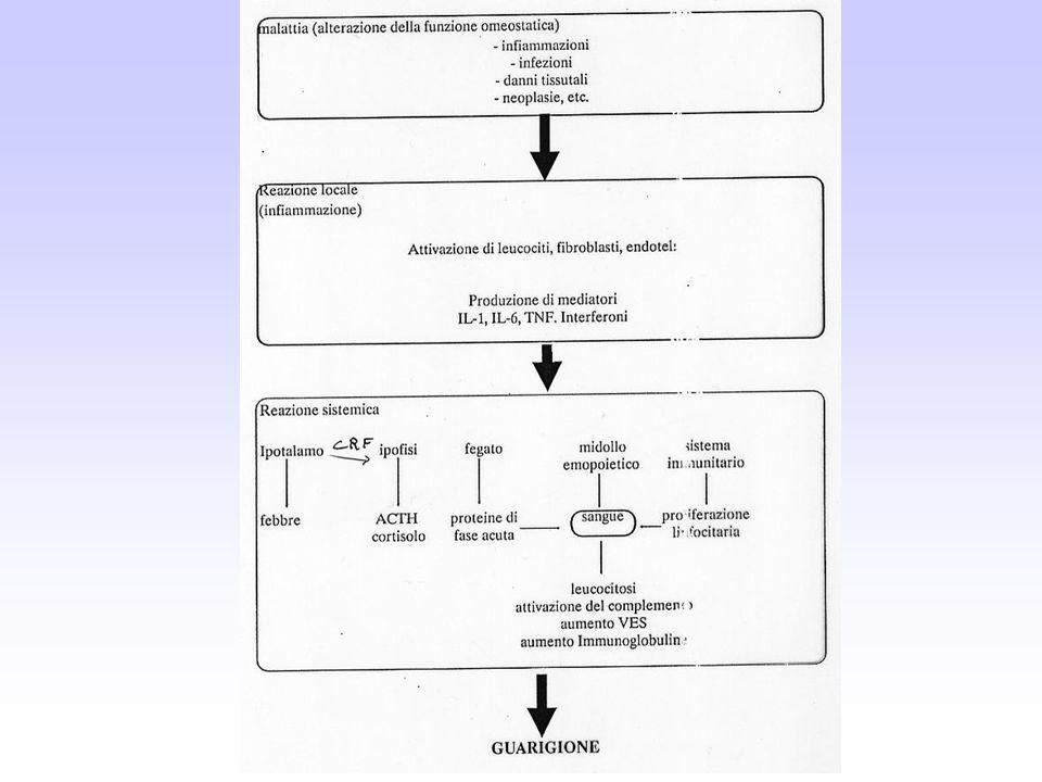 Risposta della Proteina C Reattiva (PCR) in corso di malattia Condizioni patologiche associate ad un modesto incremento serico di PCR Lupus Eritematoso sistemico Scleroderma Dermatomiosite Sindrome di Sjogren Colite ulcerosa Lucemie Applicazioni cliniche della ricerca della PCR serica Screening di patologie organiche Monitoraggio della gravità e del grado di attività di malattia Infezioni Flogosi Neoplasie Necrosi Monitoraggio di infezioni ricorrenti