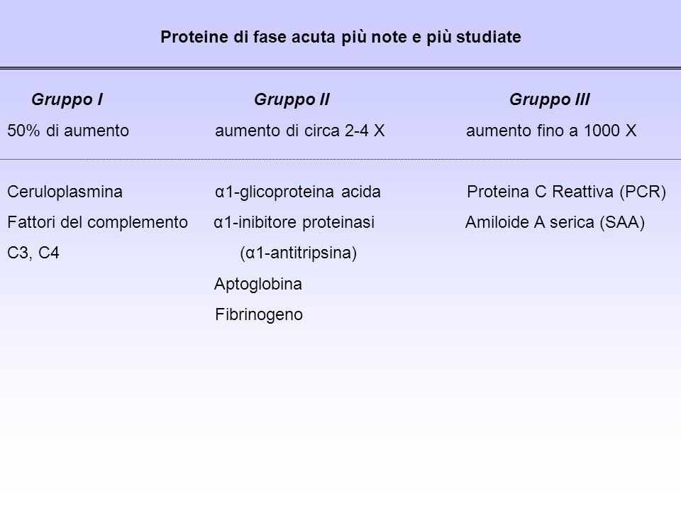 Proteine di fase acuta più note e più studiate Gruppo I Gruppo II Gruppo III 50% di aumento aumento di circa 2-4 X aumento fino a 1000 X Ceruloplasmin
