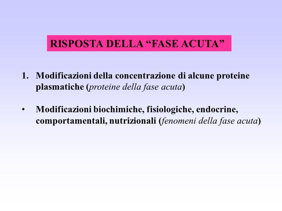 RISPOSTA DELLA FASE ACUTA 1.Modificazioni della concentrazione di alcune proteine plasmatiche (proteine della fase acuta) Modificazioni biochimiche, f
