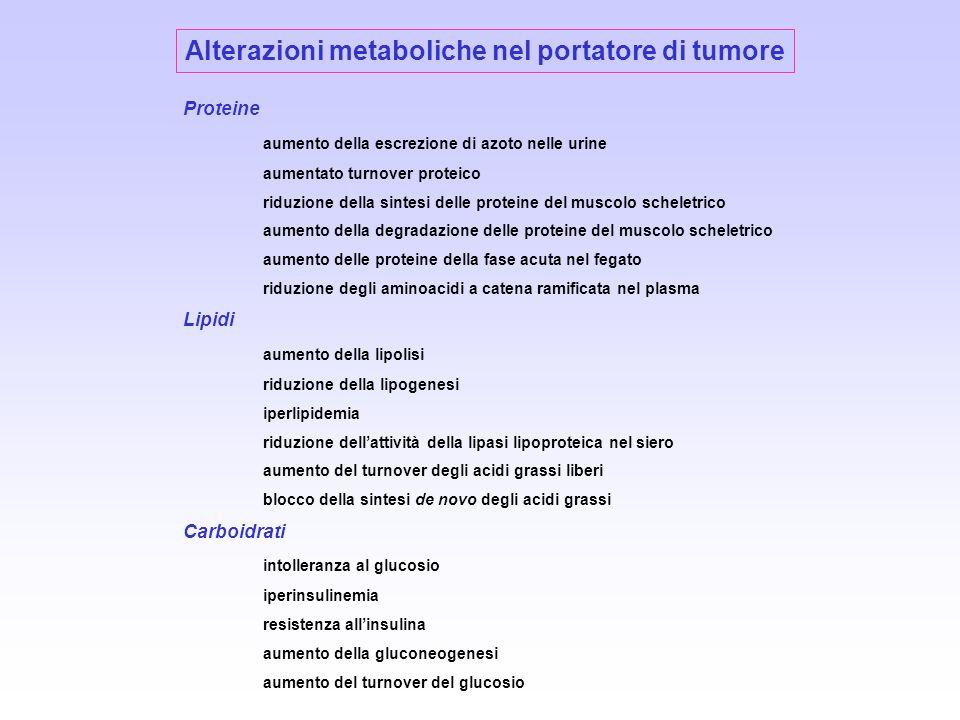 Alterazioni metaboliche nel portatore di tumore Proteine aumento della escrezione di azoto nelle urine aumentato turnover proteico riduzione della sin