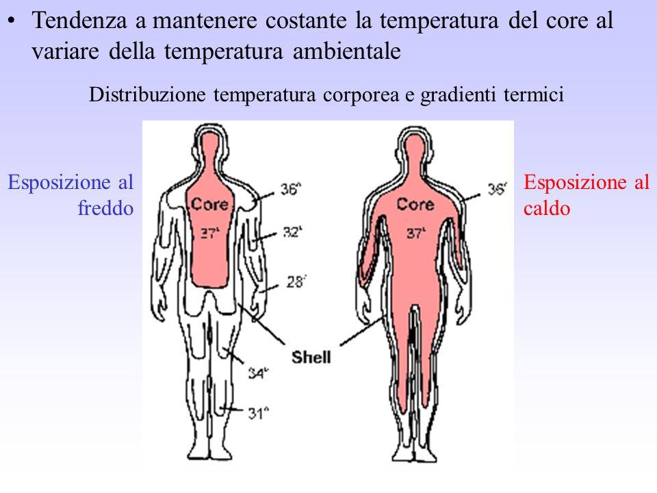 Tendenza a mantenere costante la temperatura del core al variare della temperatura ambientale Distribuzione temperatura corporea e gradienti termici E