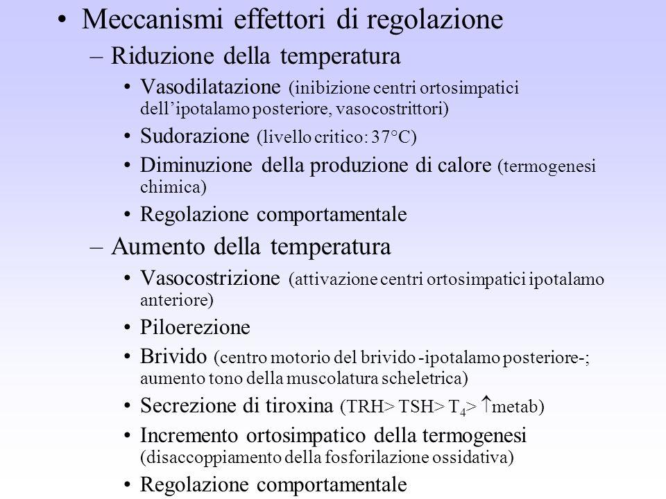 Meccanismi effettori di regolazione –Riduzione della temperatura Vasodilatazione (inibizione centri ortosimpatici dellipotalamo posteriore, vasocostri