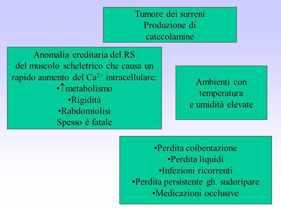 Tumore dei surreni Produzione di catecolamine Anomalia ereditaria del RS del muscolo scheletrico che causa un rapido aumento del Ca 2+ intracellulare: