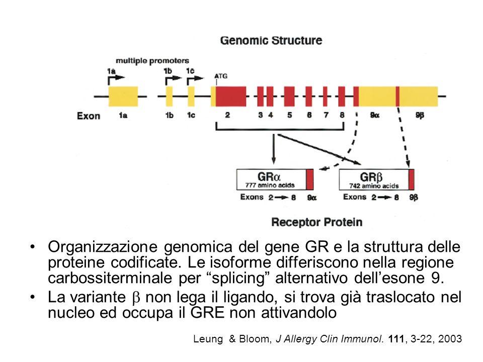 Leung & Bloom, J Allergy Clin Immunol. 111, 3-22, 2003 Organizzazione genomica del gene GR e la struttura delle proteine codificate. Le isoforme diffe