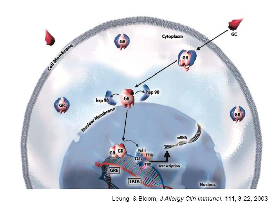 Leung & Bloom, J Allergy Clin Immunol. 111, 3-22, 2003