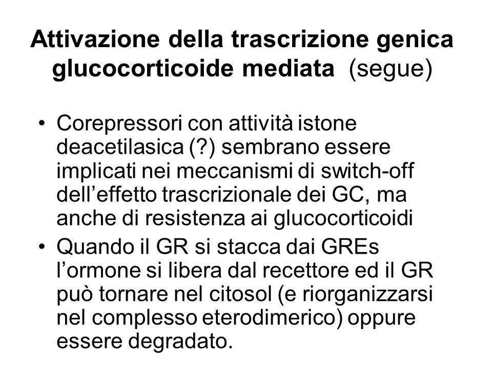 Attivazione della trascrizione genica glucocorticoide mediata (segue) Corepressori con attività istone deacetilasica (?) sembrano essere implicati nei