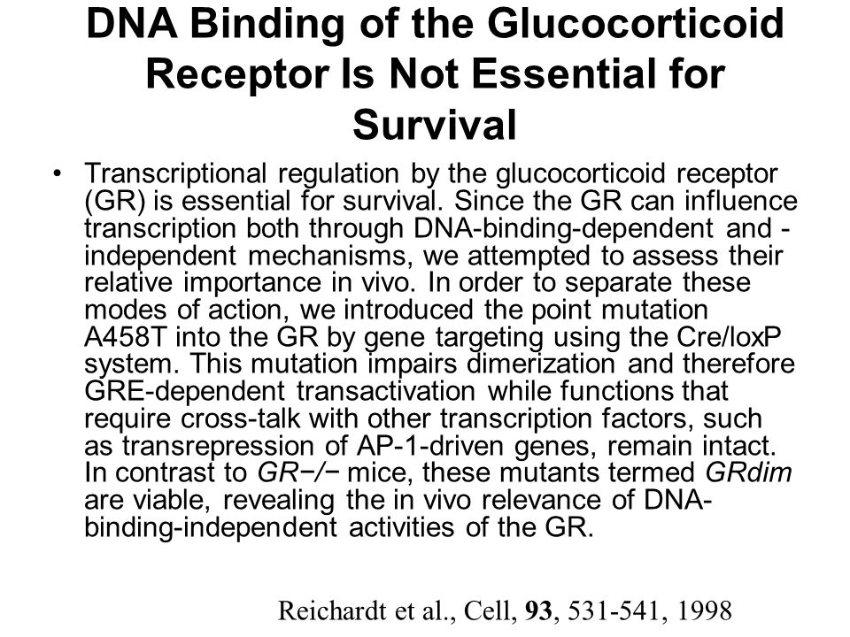 DNA Binding of the Glucocorticoid Receptor Is Not Essential for Survival Transcriptional regulation by the glucocorticoid receptor (GR) is essential for survival.