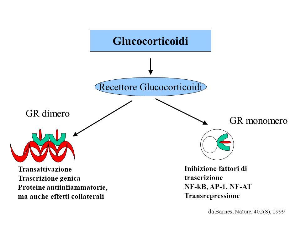 da Barnes, Nature, 402(S), 1999 Glucocorticoidi Recettore Glucocorticoidi GR monomero Inibizione fattori di trascrizione NF-kB, AP-1, NF-AT Transrepre