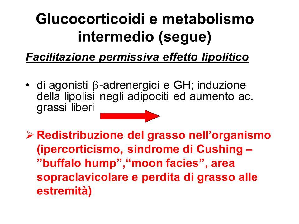 Glucocorticoidi e metabolismo intermedio (segue) Facilitazione permissiva effetto lipolitico di agonisti -adrenergici e GH; induzione della lipolisi n