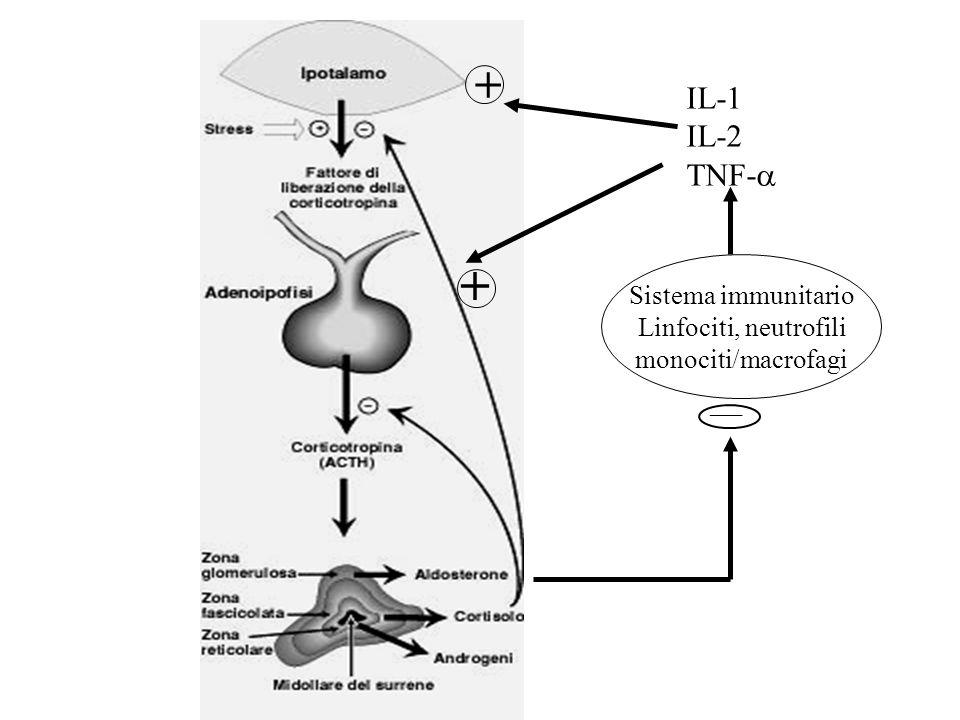 Sistema immunitario Linfociti, neutrofili monociti/macrofagi ___ IL-1 IL-2 TNF- + +