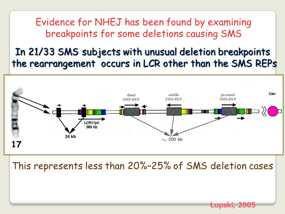 In 21/33 SMS subjects with unusual deletion breakpoints the rearrangement occurs in LCR other than the SMS REPs Lupski, 2005 Evidence for NHEJ has bee