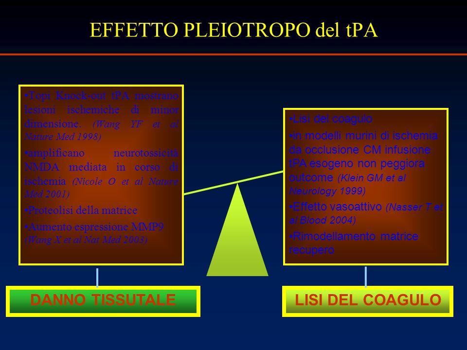 Topi Knock-out tPA mostrano lesioni ischemiche di minor dimensione. (Wang YF et al Nature Med 1998) amplificano neurotossicità NMDA mediata in corso d