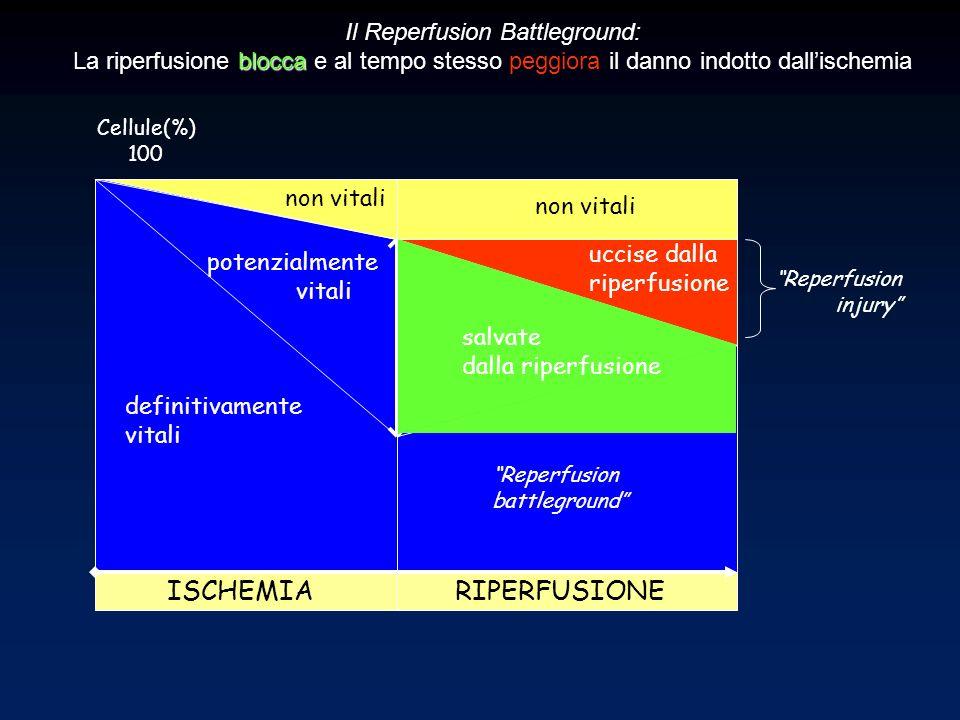 potenzialmente vitali definitivamente vitali ISCHEMIA RIPERFUSIONE Reperfusion battleground Cellule(%) 100 Il Reperfusion Battleground: blocca La ripe