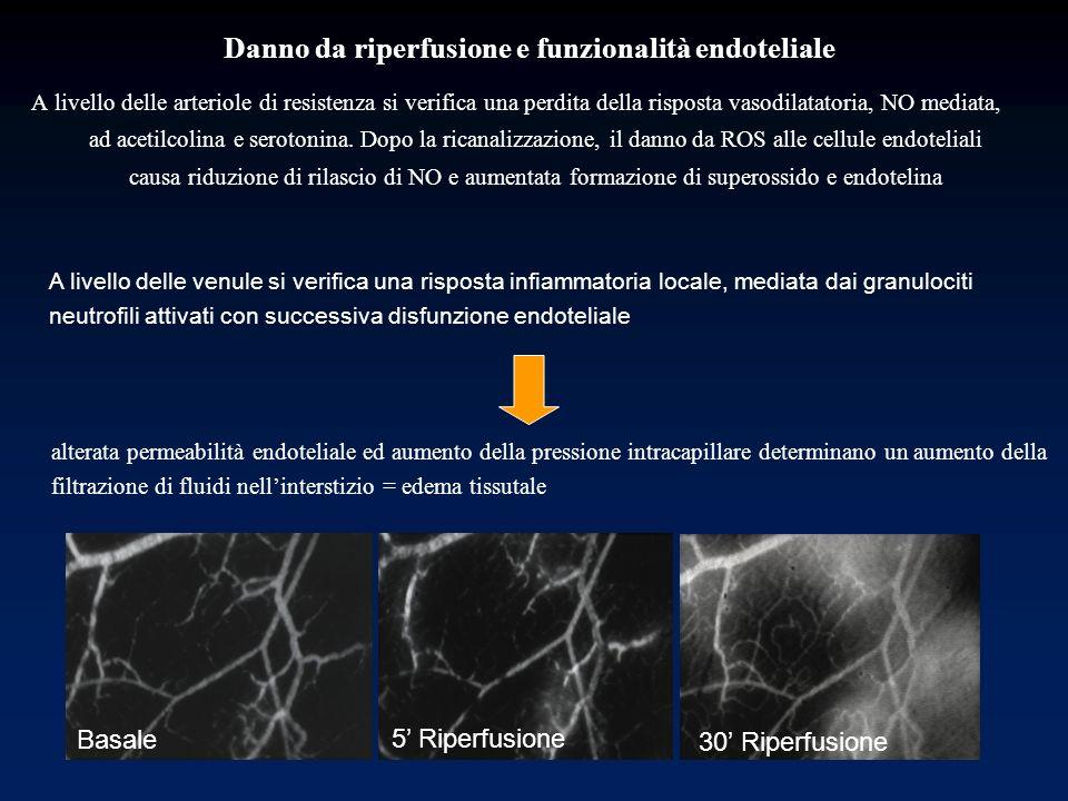 Danno da riperfusione e funzionalità endoteliale A livello delle arteriole di resistenza si verifica una perdita della risposta vasodilatatoria, NO me