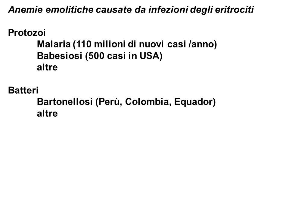 Anemie emolitiche causate da infezioni degli eritrociti Protozoi Malaria (110 milioni di nuovi casi /anno) Babesiosi (500 casi in USA) altre Batteri B