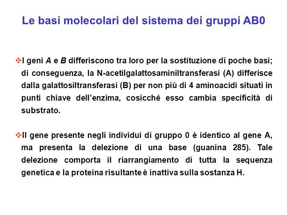 Le basi molecolari del sistema dei gruppi AB0 I geni A e B differiscono tra loro per la sostituzione di poche basi; di conseguenza, la N-acetilgalatto