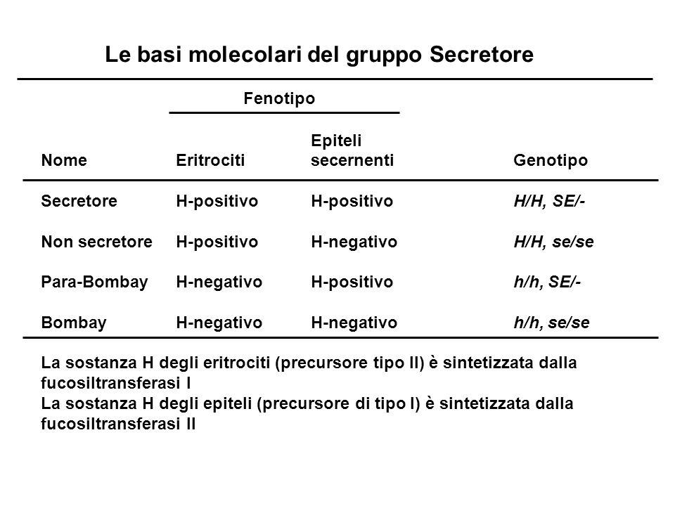 Le basi molecolari del gruppo Secretore Fenotipo Epiteli Nome Eritrociti secernenti Genotipo SecretoreH-positivoH-positivoH/H, SE/- Non secretoreH-pos