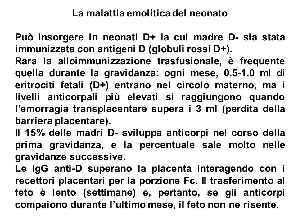La malattia emolitica del neonato Può insorgere in neonati D+ la cui madre D- sia stata immunizzata con antigeni D (globuli rossi D+). Rara la alloimm