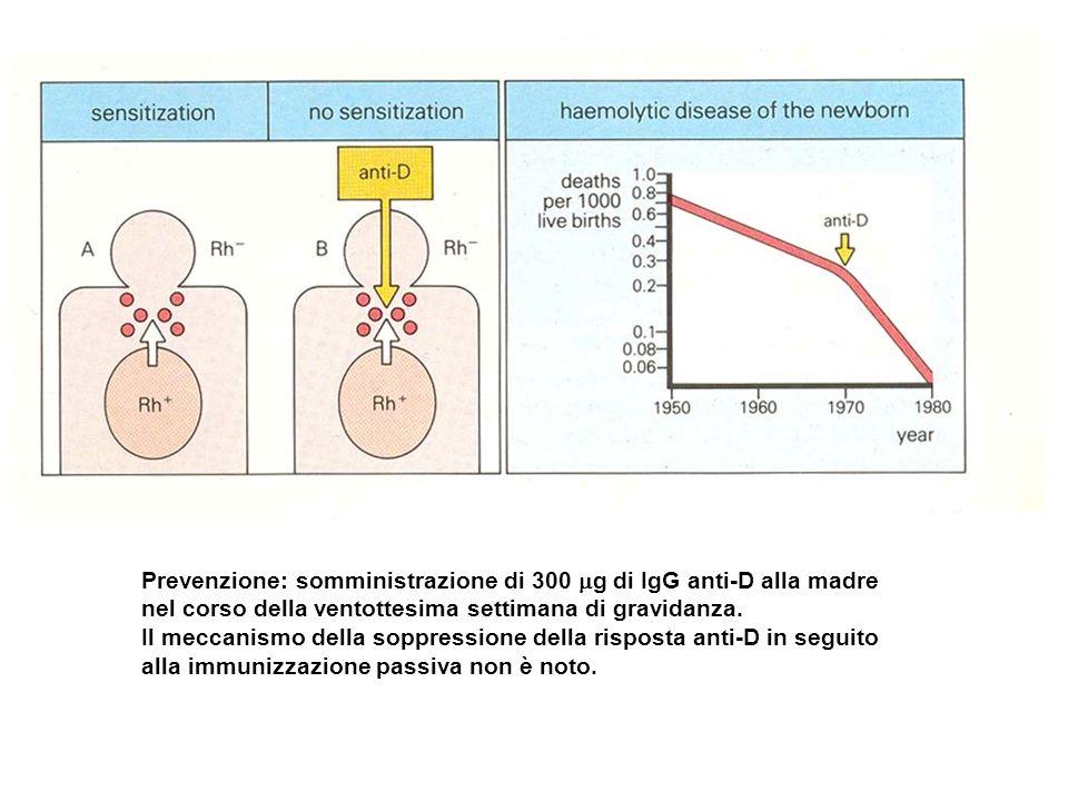 Prevenzione: somministrazione di 300 g di IgG anti-D alla madre nel corso della ventottesima settimana di gravidanza. Il meccanismo della soppressione