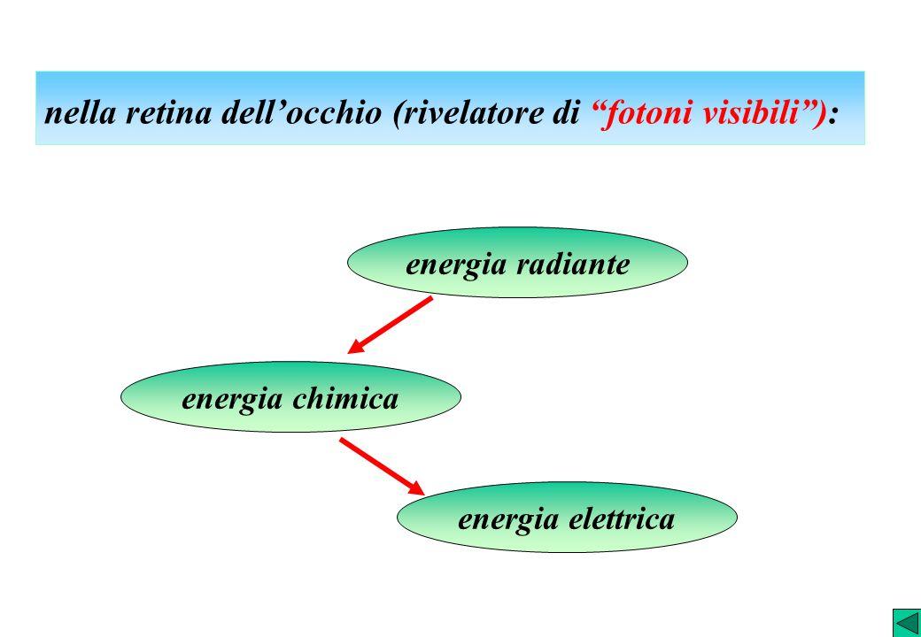 nella retina dellocchio (rivelatore di fotoni visibili): energia radiante energia elettrica energia chimica
