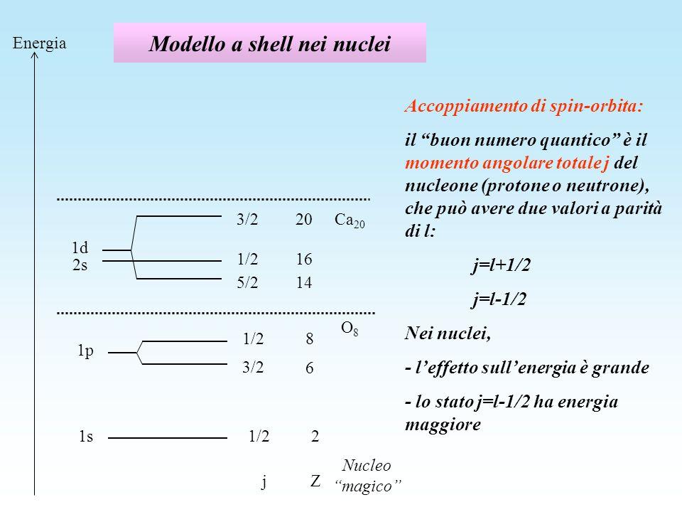 Modello a shell nei nuclei 1s1/22 Zj Energia 1p 3/2 1/2 6 8 Nucleo magico O8O8 1d 5/2 3/2 14 20 1/216 2s Ca 20 Accoppiamento di spin-orbita: il buon n